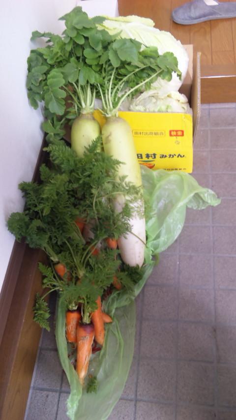お野菜さん